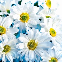 Karnet kwiatowy KW /Art Nuvo/