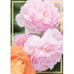 Karnet PP kwiatowy bez...
